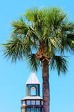 Palm by muzikIsMEDS, photography->nature gallery