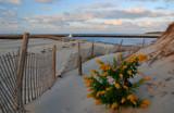 evening glow by solita17, Photography->Shorelines gallery