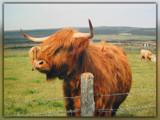 Meeeeeee!!!!! by wimida, Photography->Animals gallery