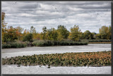 Gulls Over Mud Creek by Jimbobedsel, Photography->Shorelines gallery