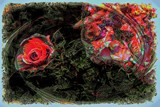Only a Rose... by snapshooter87, photography->manipulation gallery