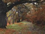 Sherwood by jojomercury, Photography->Manipulation gallery