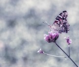 Butterfly Garden #4 by tigger3, photography->butterflies gallery