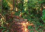 Faery Path by sharonva, photography->landscape gallery