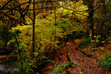 An Autumnal walk by biffobear, photography->nature gallery