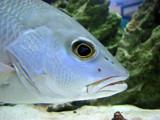Fisheye Lens? by spoton, Photography->Underwater gallery