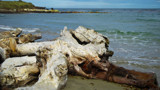 Driftwood by LynEve, photography->shorelines gallery