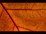oak patterns by ekowalska, photography->nature gallery