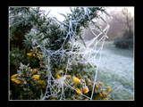 Web! by JQ, Photography->Landscape gallery