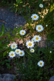 Flowers of East Tennessee by Pistos, photography->flowers gallery