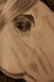 Horse Eye by MustangGirl95, illustrations->traditional gallery