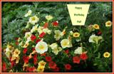 Happy Birthday Pat! by trixxie17, photography->flowers gallery