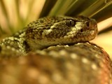 Snake!! by drgibson, Photography->Reptiles/amphibians gallery