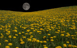 Dandelion Moon by Mitsubishiman, photography->manipulation gallery