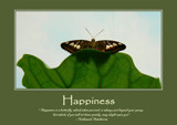 Happiness Poster by LynEve, photography->butterflies gallery