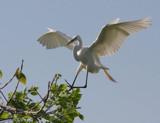 Soft landing by Vivianne, Photography->Birds gallery