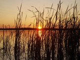 Summer's Eve, through the reeds by ckranz2385, Photography->Sunset/Rise gallery