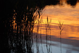sunset water reeds by solita17, Photography->Water gallery