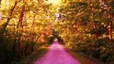 Purple Trail Dreams by galaxygirl1, photography->manipulation gallery
