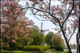Framed By Spring by corngrowth, photography->mills gallery