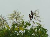 Love Birds by cctruckee, Photography->Birds gallery