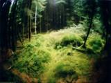 puerile phantasm by monkeypuzzle, photography->landscape gallery
