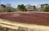 Cranberry Bog by cynlee, photography->landscape gallery
