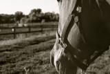 Ollivander in the Afternoon by Ollivander, photography->animals gallery