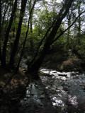 Broceliande Forest II by jesouris, Photography->Landscape gallery