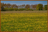 Golden Tones Of Spring 2 by corngrowth, Photography->Landscape gallery