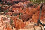 Glowing Spires in Bryce Canyon by nmsmith, photography->landscape gallery