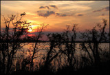 Shoreline Silhouettes by allisontaylor, Photography->Sunset/Rise gallery