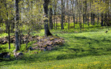 Spring glade by Junglegeorge, Photography->Landscape gallery