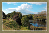 Zeeland Countryside (39), Rammekenshoek by corngrowth, Photography->Landscape gallery