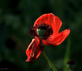 Wild Flower Collection #4 by tigger3, photography->flowers gallery