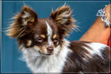 'Watchdog' by corngrowth, photography->pets gallery