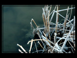 Riverside Stalks in Retirement by tielji, Photography->Shorelines gallery