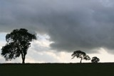 trees... by fogz, Photography->Landscape gallery