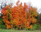 Bridgeton Fall by jojomercury, photography->nature gallery