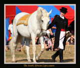 The South African Lipizzaners Nr 2 by mmynx34, Photography->Animals gallery