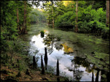 Pearl River Swamp by allisontaylor, Photography->Landscape gallery