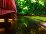 Sequoita Bridge by galaxygirl1, photography->bridges gallery