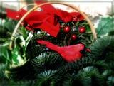 Seasonal by trixxie17, holidays->christmas gallery