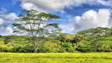 Jurassic Landscape by jeenie11, photography->landscape gallery
