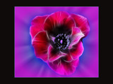 Flower Power by LynEve, Photography->Manipulation gallery