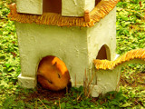 House Owner by Blumie, photography->pets gallery