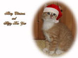 Merry Christmas by MarianaEwa, Holidays->Christmas gallery