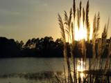 Sunlit Pampas by CanoeGuru, Photography->Sunset/Rise gallery