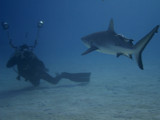 Shark & Photographer by r0bbyr0b, Photography->Underwater gallery