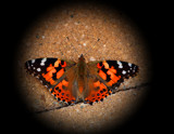 Calendar Delight_Flutterby by tigger3, photography->butterflies gallery
